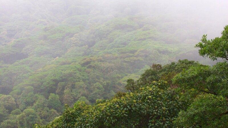 Nebelwald Costa Rica © Diamir