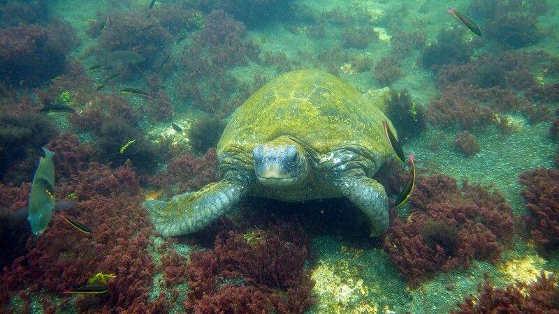 Wasserschildkröte und farbenfrohe Unterwasserwelt © Diamir