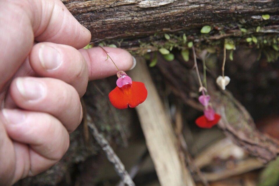 Orchideen: Farbtupfer im dichten Grün
