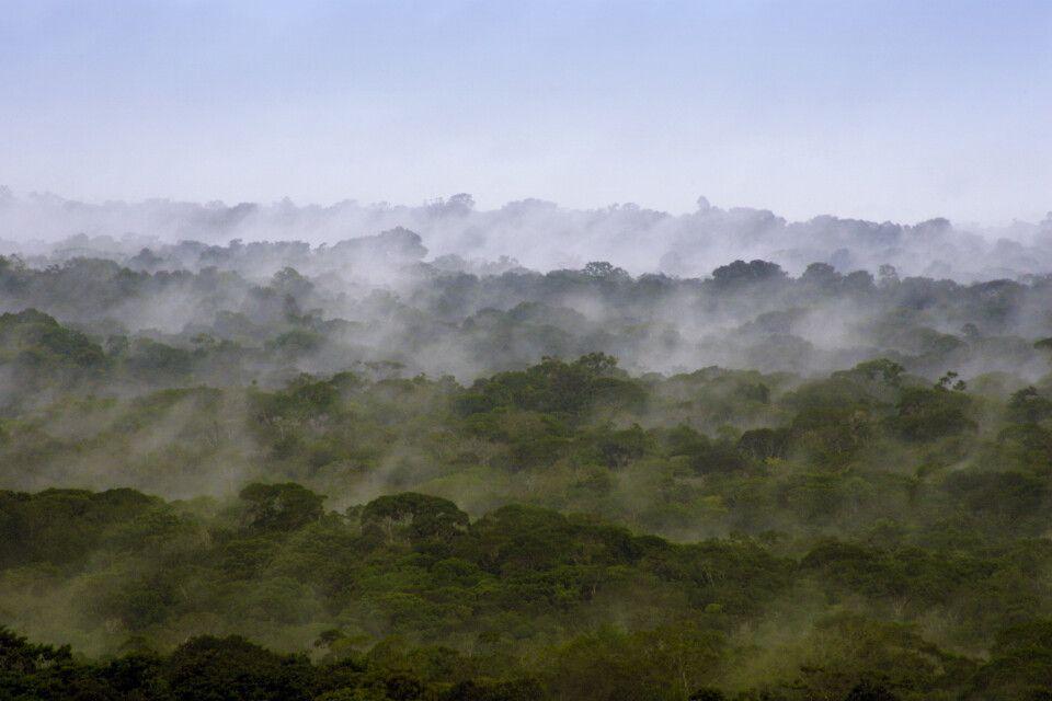 Über dem Dach des Dschungels in Guyana