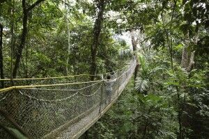 Hängebrücken durch den Atta Rainforest Dschungel