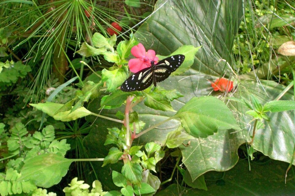 Schmetterlingshaus Mindo